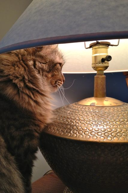 More lamp-napping