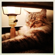 Lamp-napping