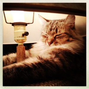 Lamp-napping